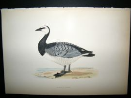Morris 1870 Antique Hand Col Bird Print. Bernicle Goose